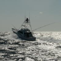 Over the last 26 years fishing Billfish