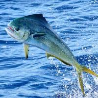 PRIVATE OFFSHORE FISHING CHARTERS