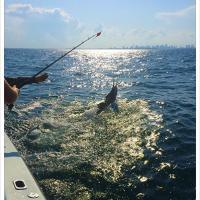 Boat & Tackle Nomad Fishing Charters