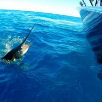Dolphin charter fishing experiences