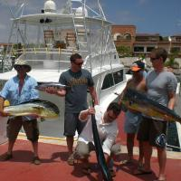 Sailfish, Blackfin Tuna, Mahi, Wahoo, Sharks